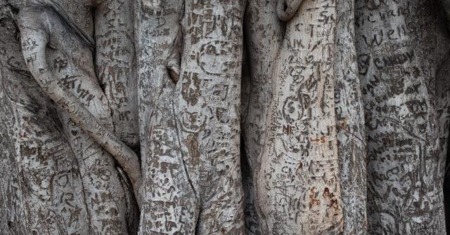 Banyan tree, Lahaina, Maui, Hawaii | www.ravenswork.com