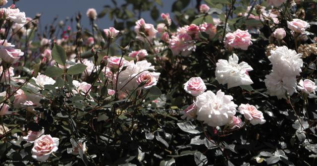 Ara's Garden