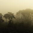 Monterey, CA in smoke