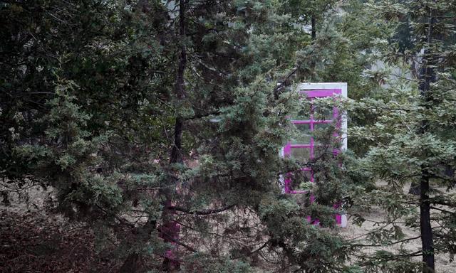 door in a forest